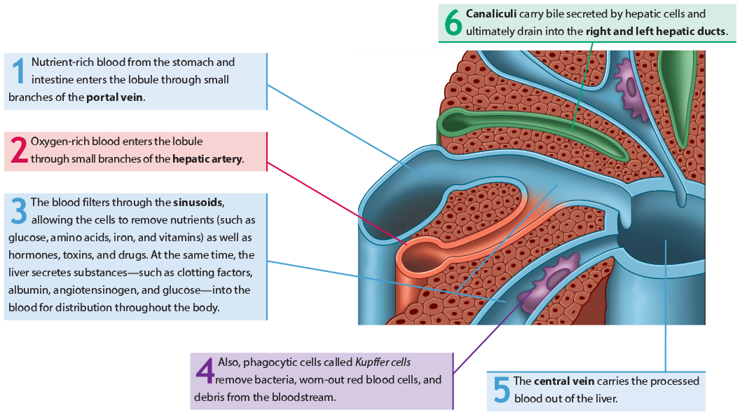 Iacademy Understanding Anatomy Physiology Learning About